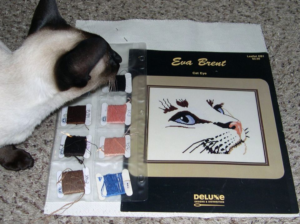 "New Start""Cat Eye"" By Eva Brent16 count fabricDMC flossFinish size will be 10 1/4 X 8"